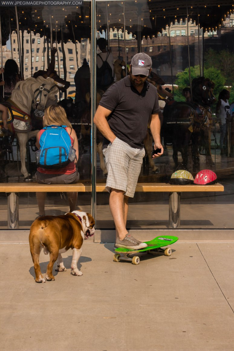 Bulldog with his owner playing with a skateboard near Jane's Carousel in Brooklyn Bridge Park located in DUMBO Brooklyn New York.
