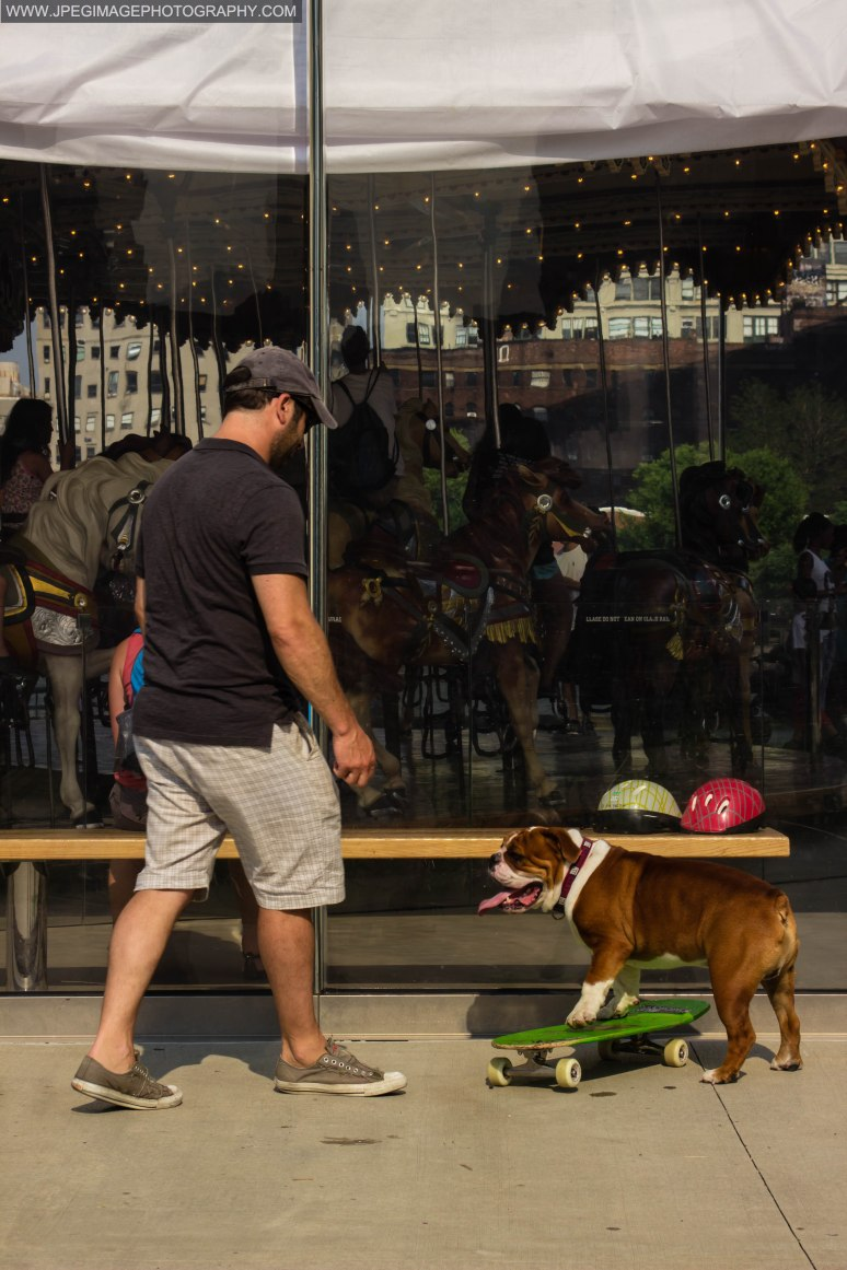 Bulldog and owner playing with a skateboard near Jane's Carousel in Brooklyn Bridge Park located in DUMBO Brooklyn New York.